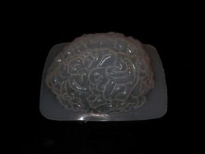 brain mold 004