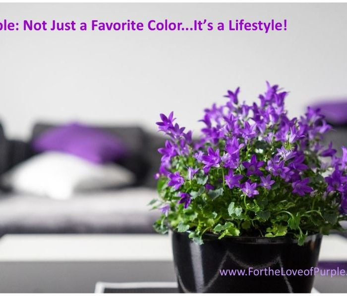 What's new at For the Love of Purple?