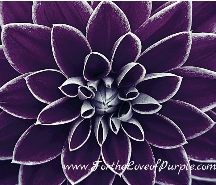 Purple Best of January 2021